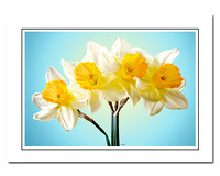 daffodils note cards